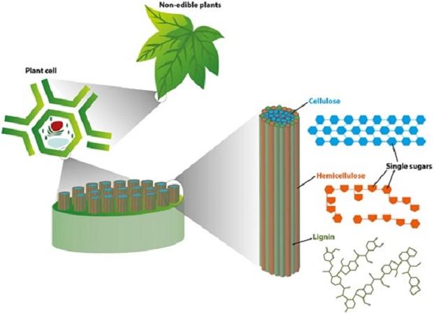 Φθηνή μέθοδος για παραγωγή καυσίμων από φυτά