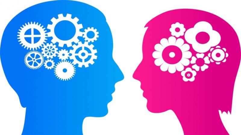 Μελέτη δείχνει ότι οι εγκέφαλοι κοριτσιών και αγοριών είναι όμοιοι παράγοντας ίσες μαθηματικές δεξιότητες